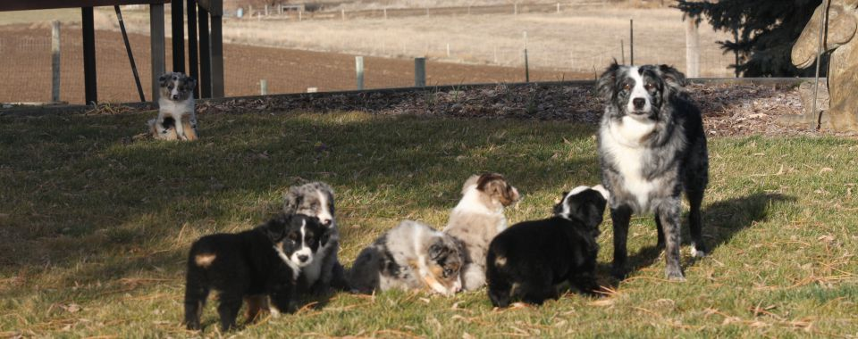 Sharpie on the farm with the pups.